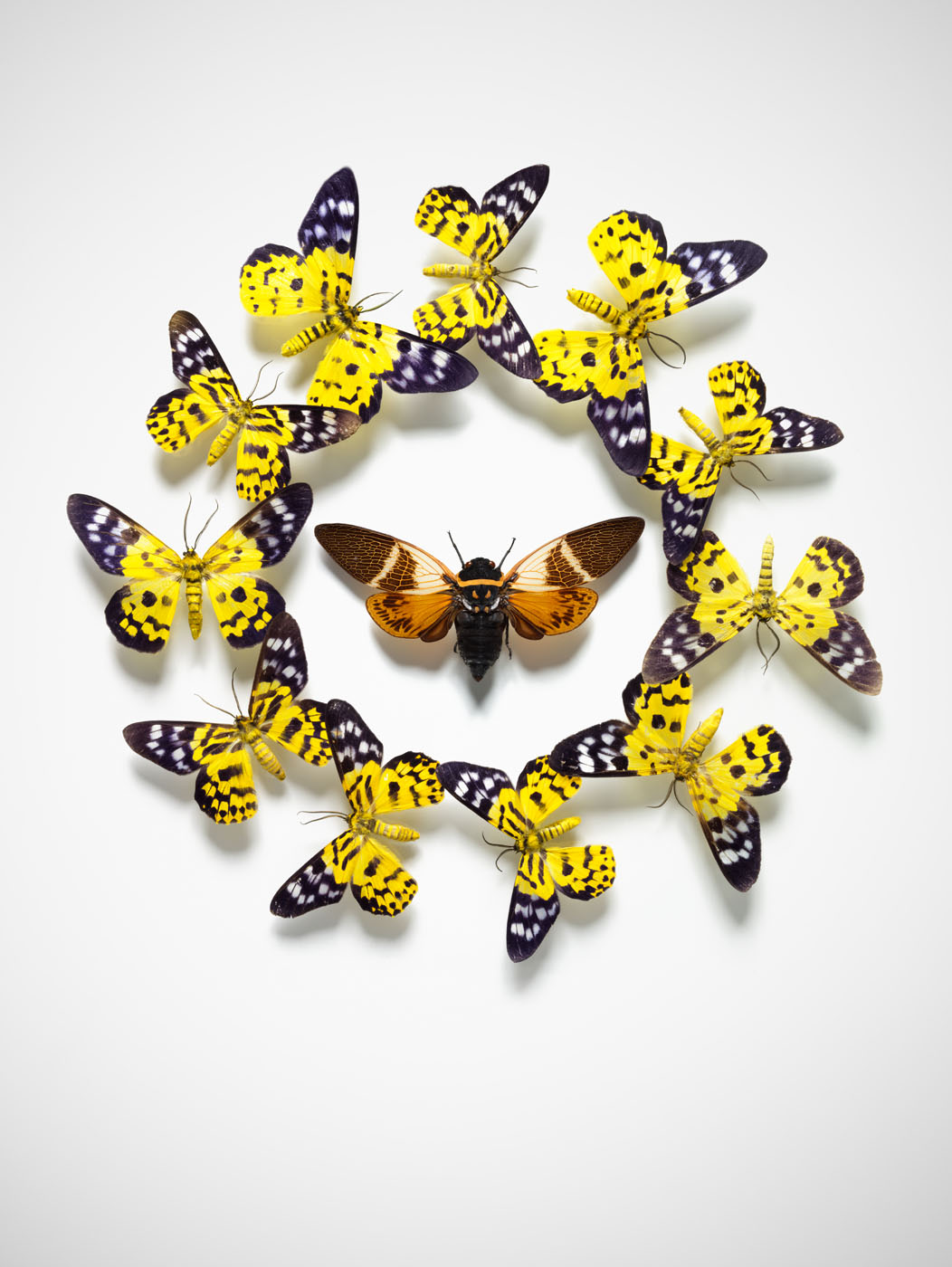 AK_Test_Butterflies_yellow2400